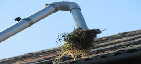 Removing weeds from gutter